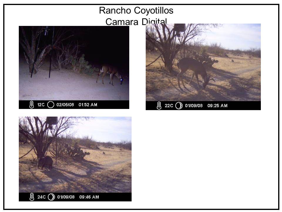 Rancho Coyotillos Camara Digital