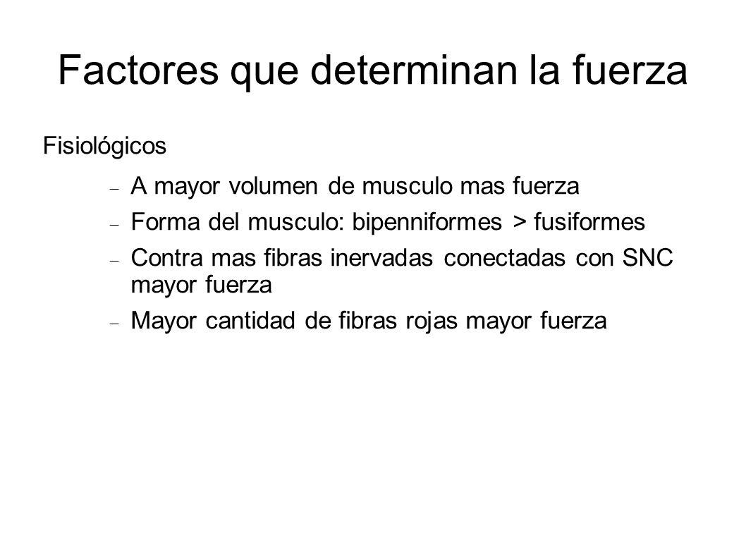 Factores que determinan la fuerza