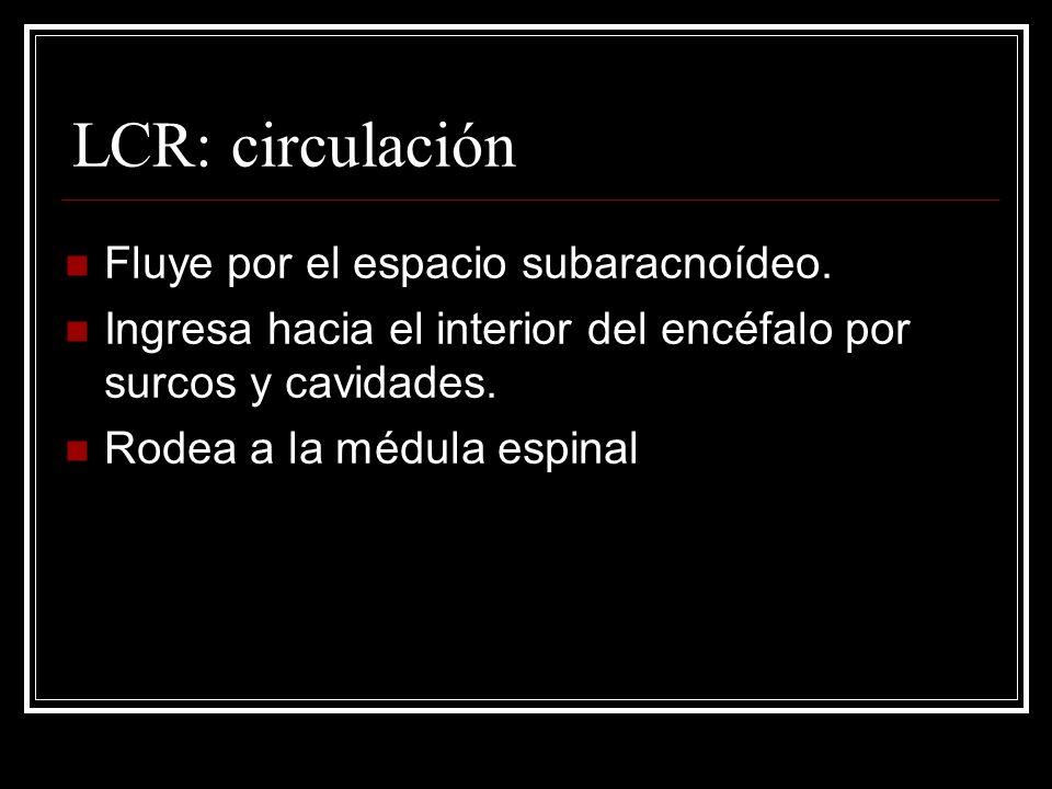 LCR: circulación Fluye por el espacio subaracnoídeo.