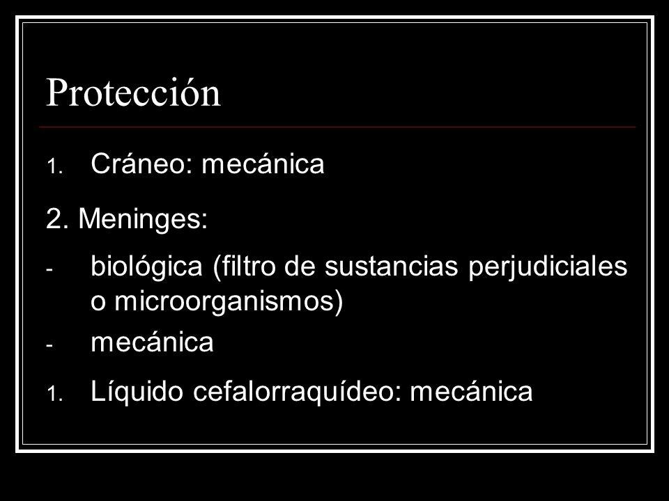 Protección Cráneo: mecánica 2. Meninges: