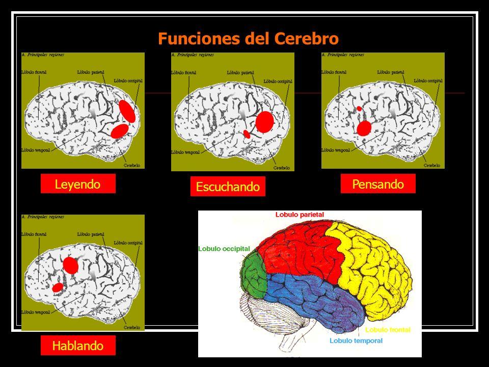 Funciones del Cerebro Leyendo Escuchando Pensando Hablando