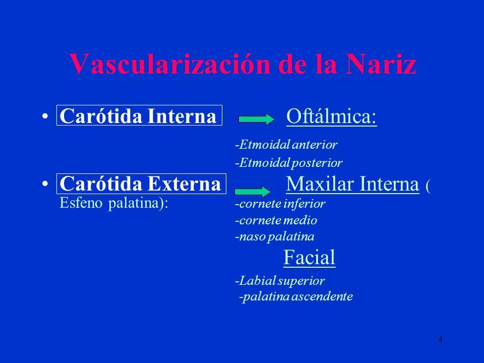 Vascularización de la Nariz