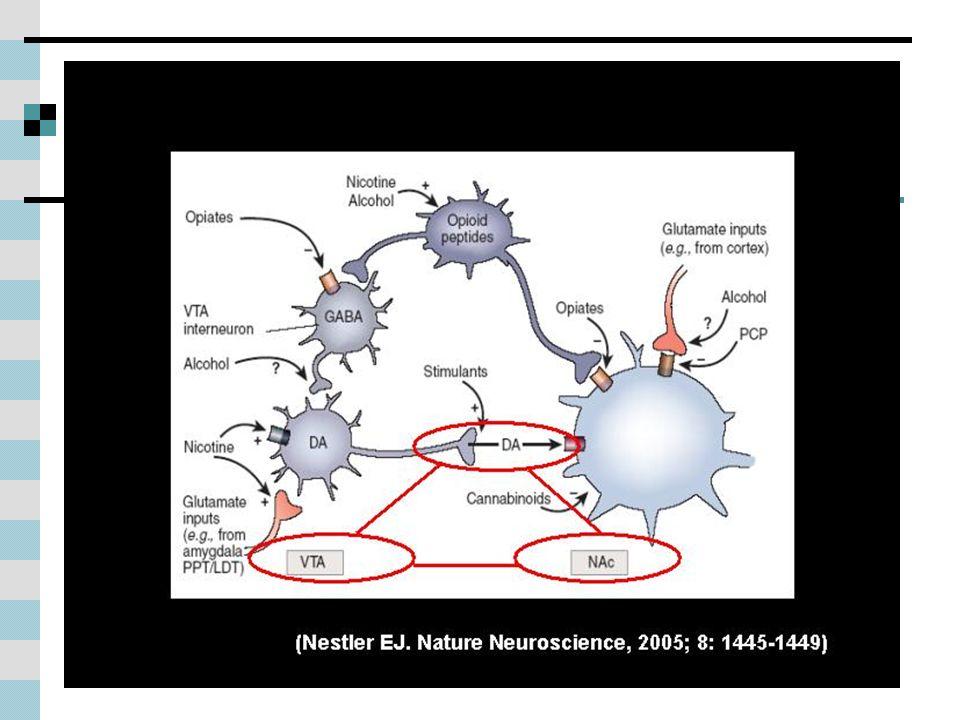 Todas las sustancias adictivas tienen en común su capacidad de provocar un aumento de los niveles de dopamina, especialmente en una estructura denominada núcleo accumbens (NAc), ya sea de manera directa o indirecta (Imagen_2).