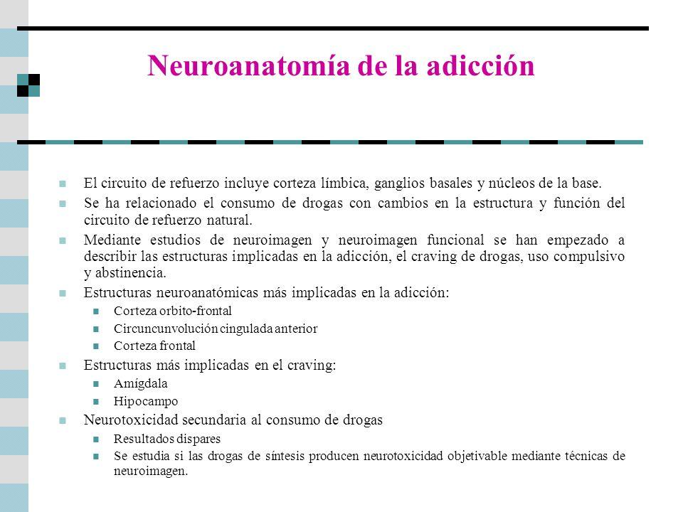 Neuroanatomía de la adicción