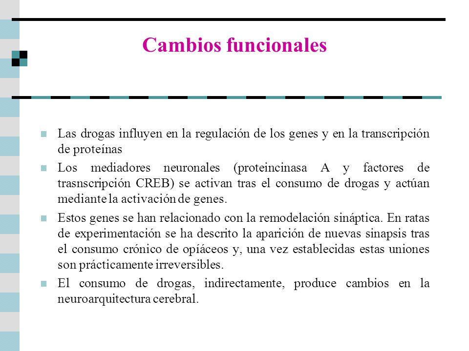 Cambios funcionales Las drogas influyen en la regulación de los genes y en la transcripción de proteínas.