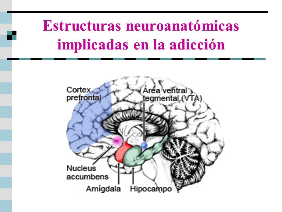 Estructuras neuroanatómicas implicadas en la adicción