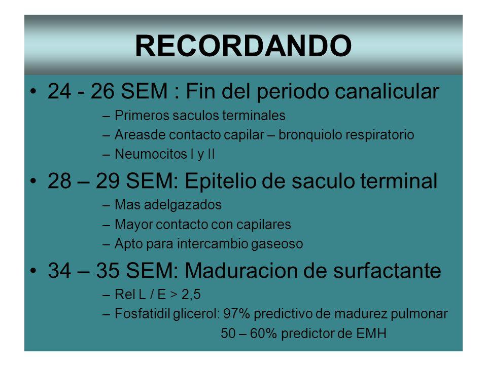 RECORDANDO 24 - 26 SEM : Fin del periodo canalicular