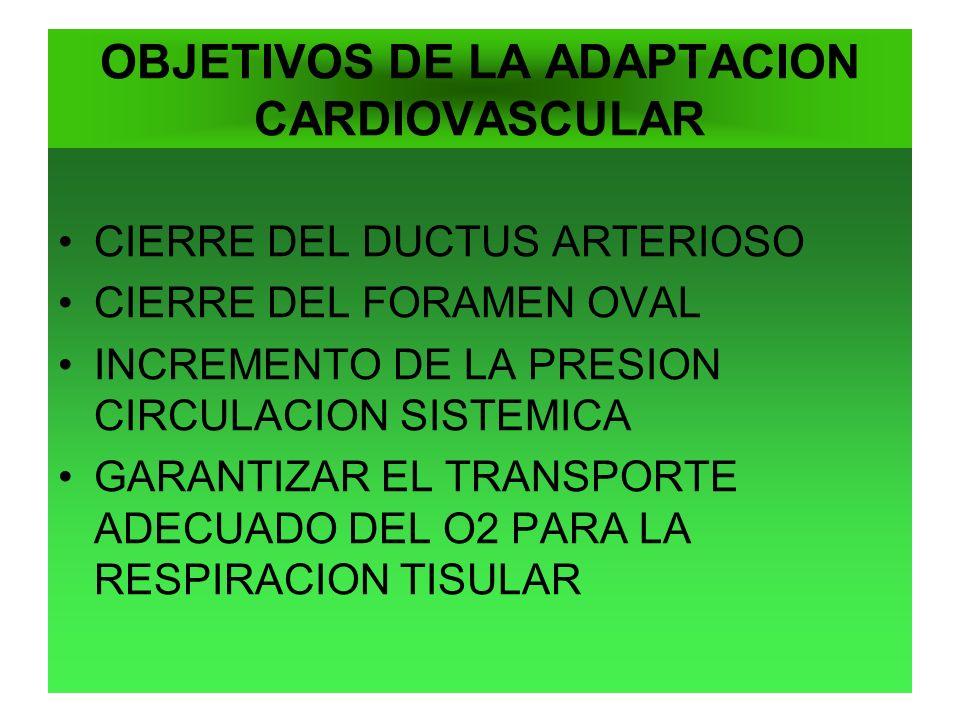 OBJETIVOS DE LA ADAPTACION CARDIOVASCULAR