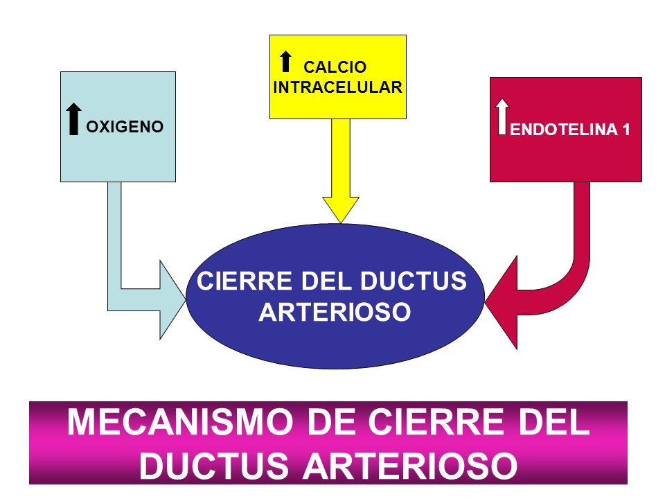 MECANISMO DE CIERRE DEL DUCTUS ARTERIOSO