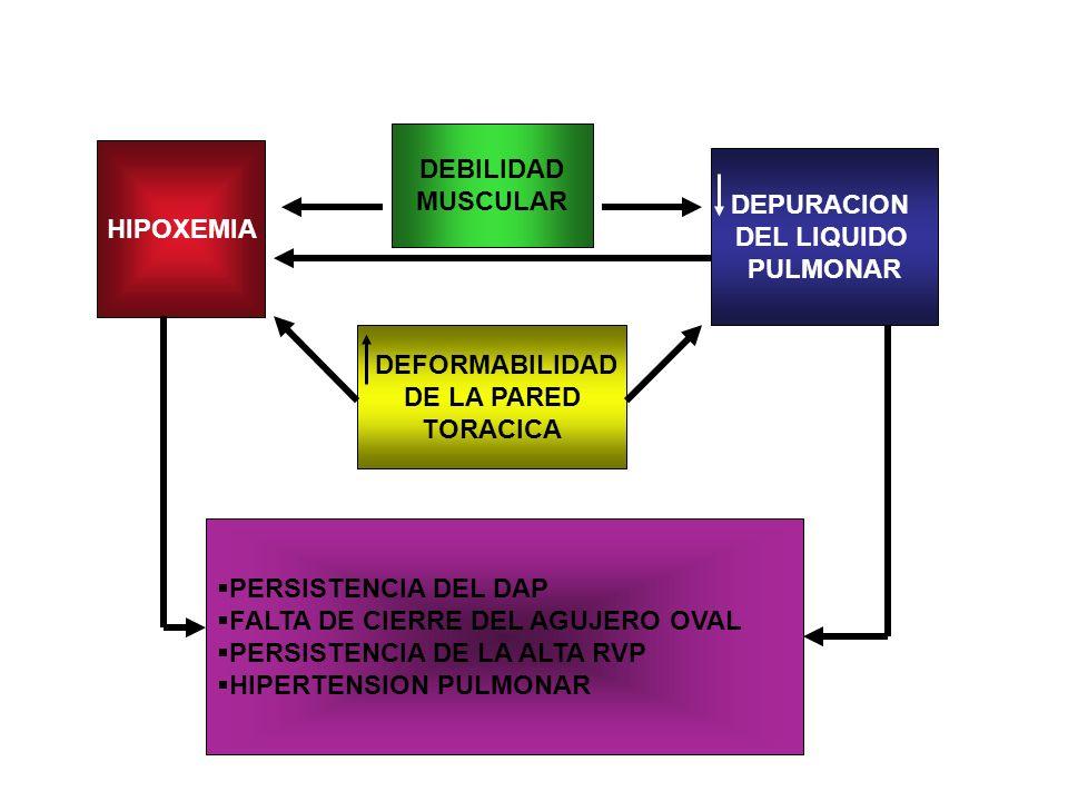 DEBILIDAD MUSCULAR. HIPOXEMIA. DEPURACION. DEL LIQUIDO. PULMONAR. DEFORMABILIDAD. DE LA PARED.