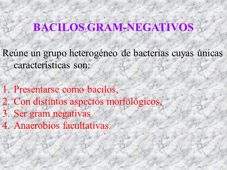 BACILOS GRAM-NEGATIVOS