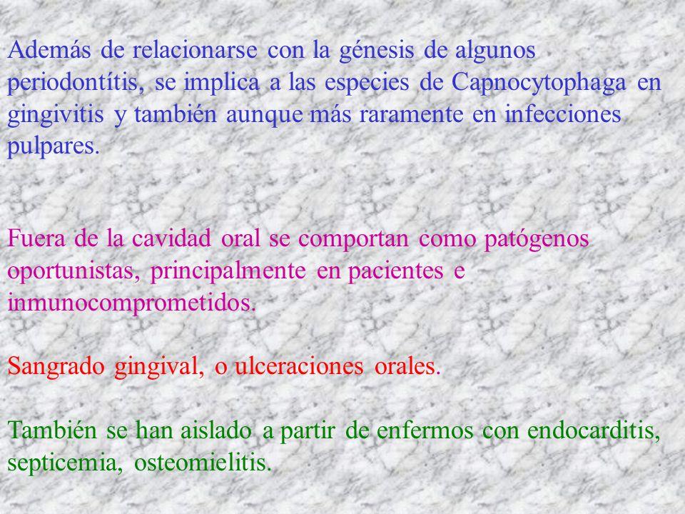 Además de relacionarse con la génesis de algunos periodontítis, se implica a las especies de Capnocytophaga en gingivitis y también aunque más raramente en infecciones pulpares.