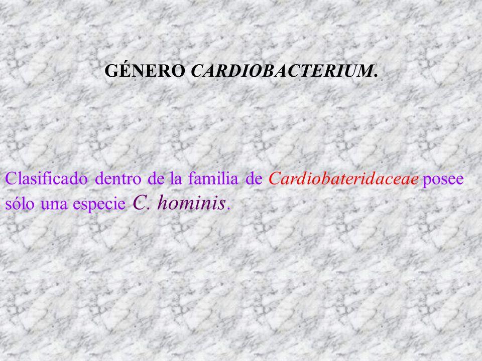 GÉNERO CARDIOBACTERIUM.