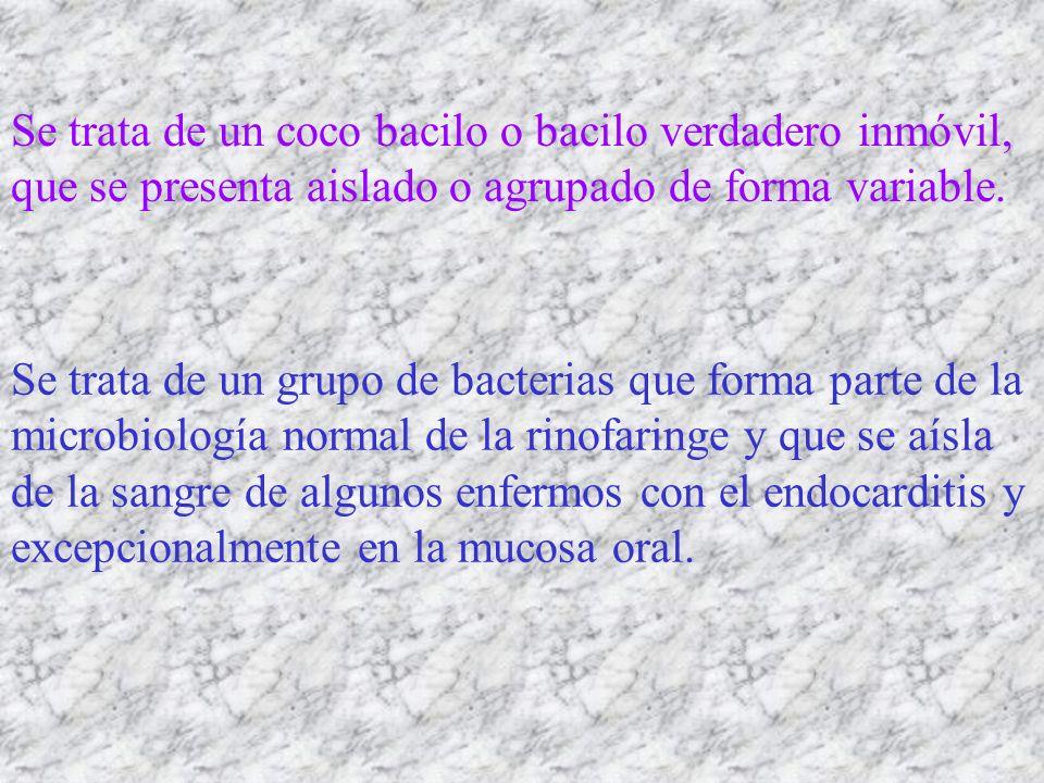 Se trata de un coco bacilo o bacilo verdadero inmóvil, que se presenta aislado o agrupado de forma variable.