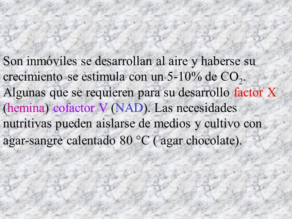 Son inmóviles se desarrollan al aire y haberse su crecimiento se estimula con un 5-10% de CO2.