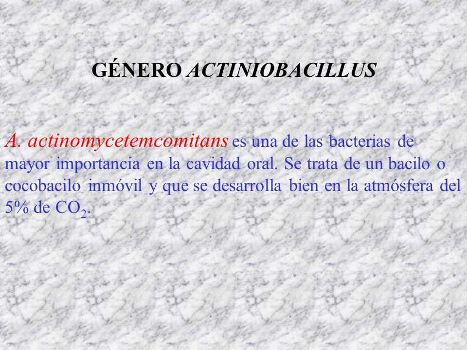GÉNERO ACTINIOBACILLUS