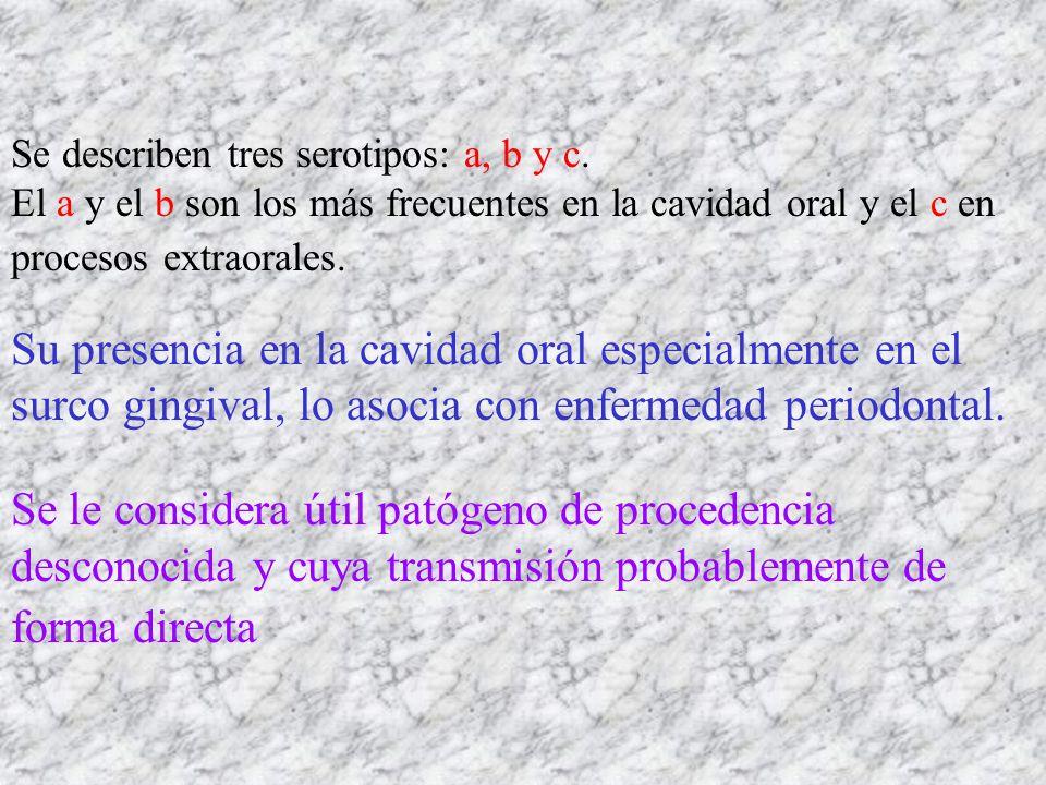 Se describen tres serotipos: a, b y c.