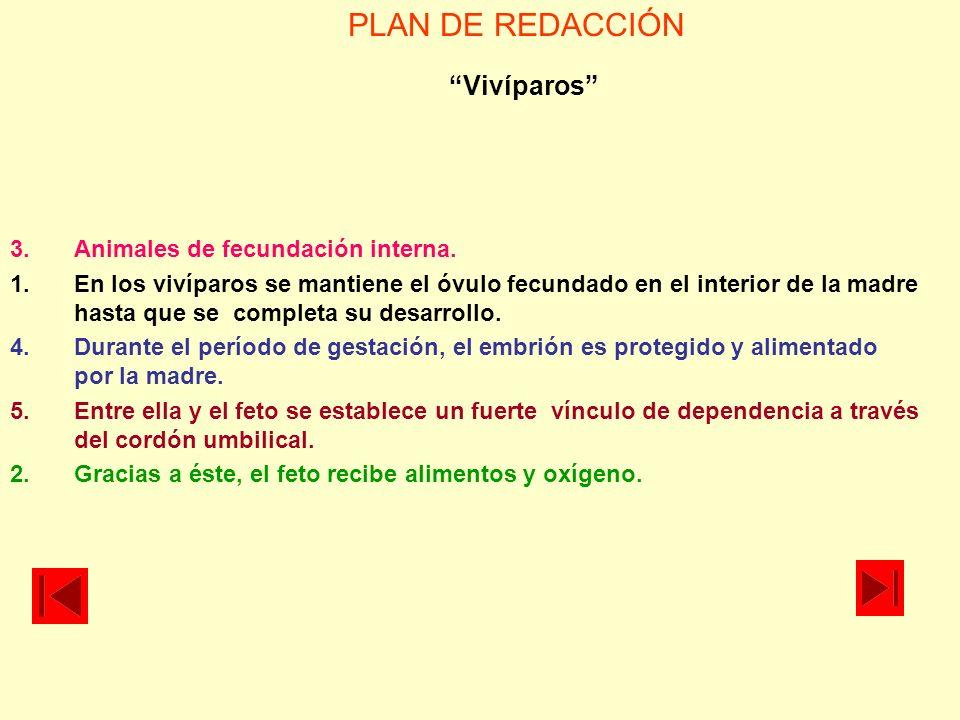 PLAN DE REDACCIÓN Vivíparos