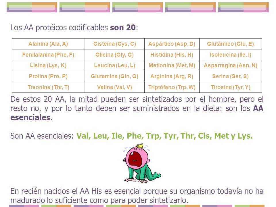 Los AA protéicos codificables son 20:
