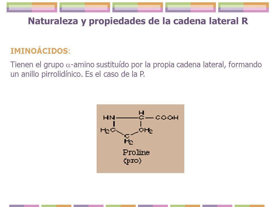 Naturaleza y propiedades de la cadena lateral R