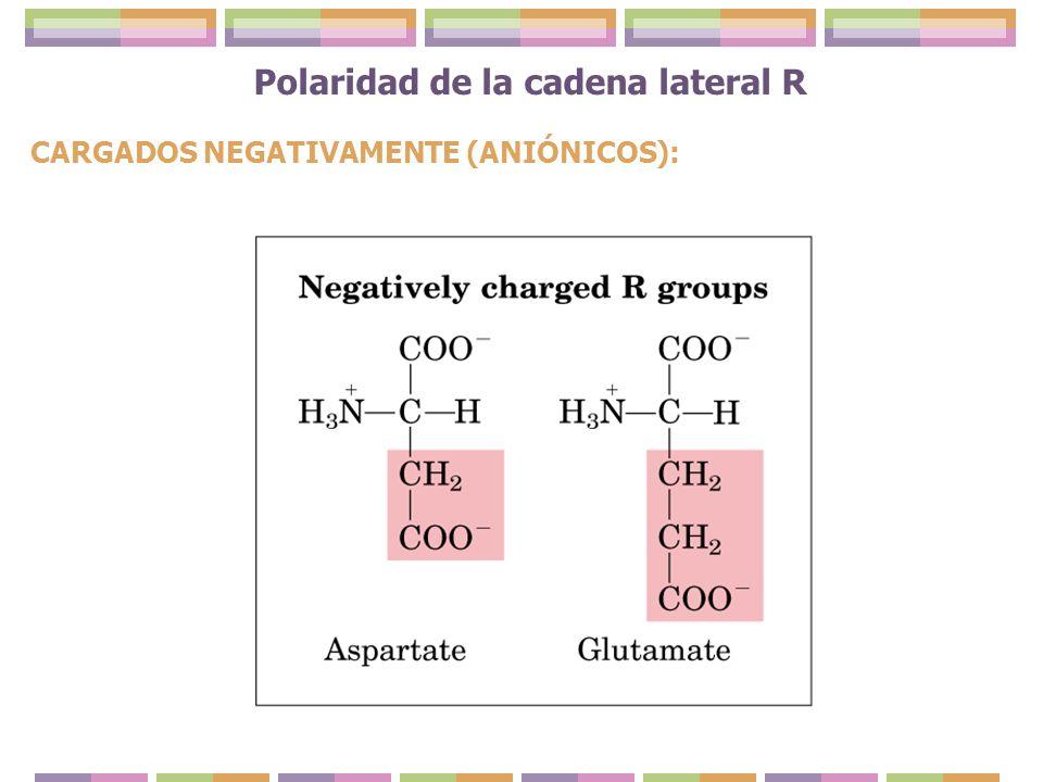 Polaridad de la cadena lateral R