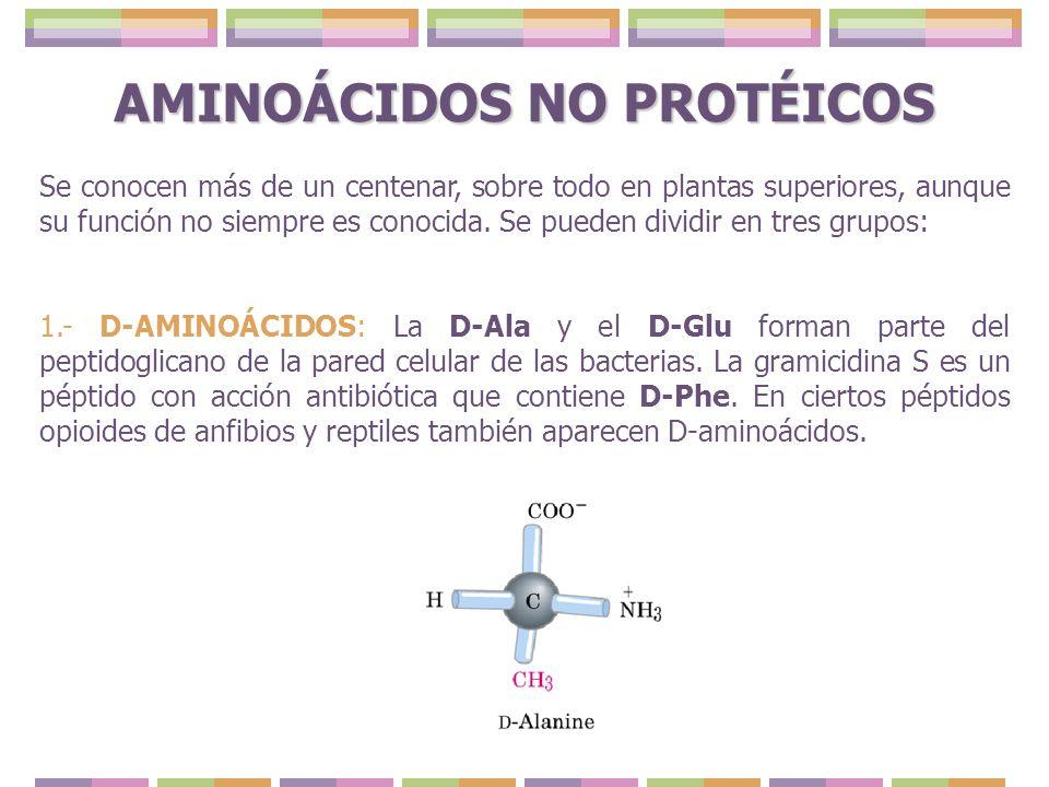 AMINOÁCIDOS NO PROTÉICOS