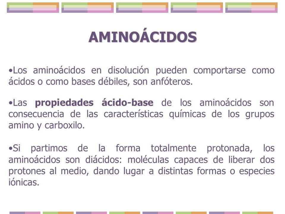 AMINOÁCIDOS Los aminoácidos en disolución pueden comportarse como ácidos o como bases débiles, son anfóteros.