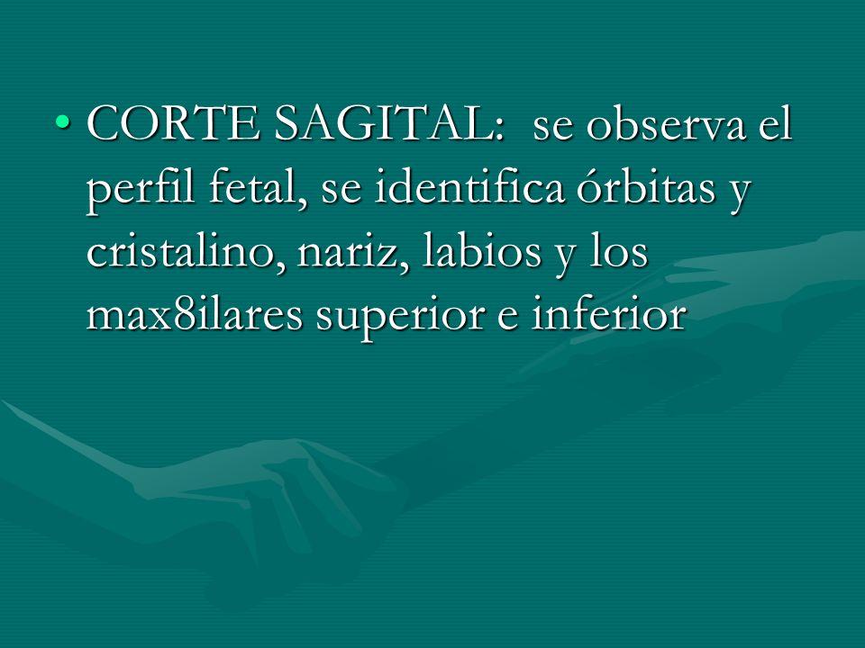 CORTE SAGITAL: se observa el perfil fetal, se identifica órbitas y cristalino, nariz, labios y los max8ilares superior e inferior