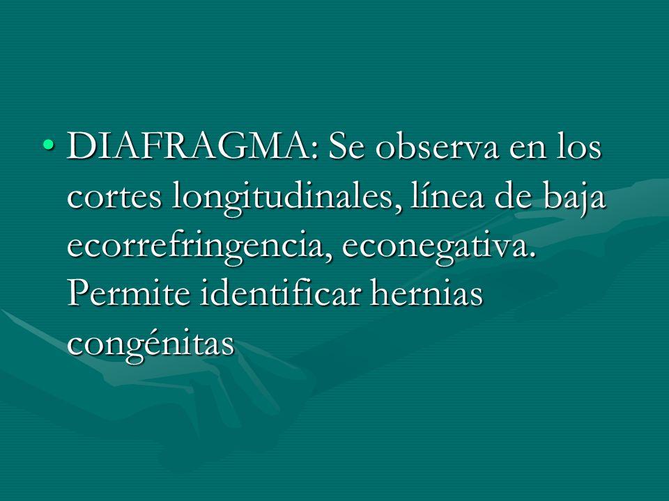 DIAFRAGMA: Se observa en los cortes longitudinales, línea de baja ecorrefringencia, econegativa.