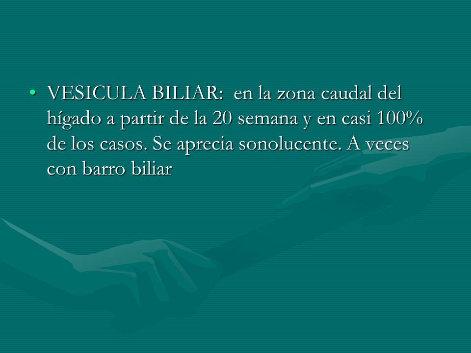 VESICULA BILIAR: en la zona caudal del hígado a partir de la 20 semana y en casi 100% de los casos.