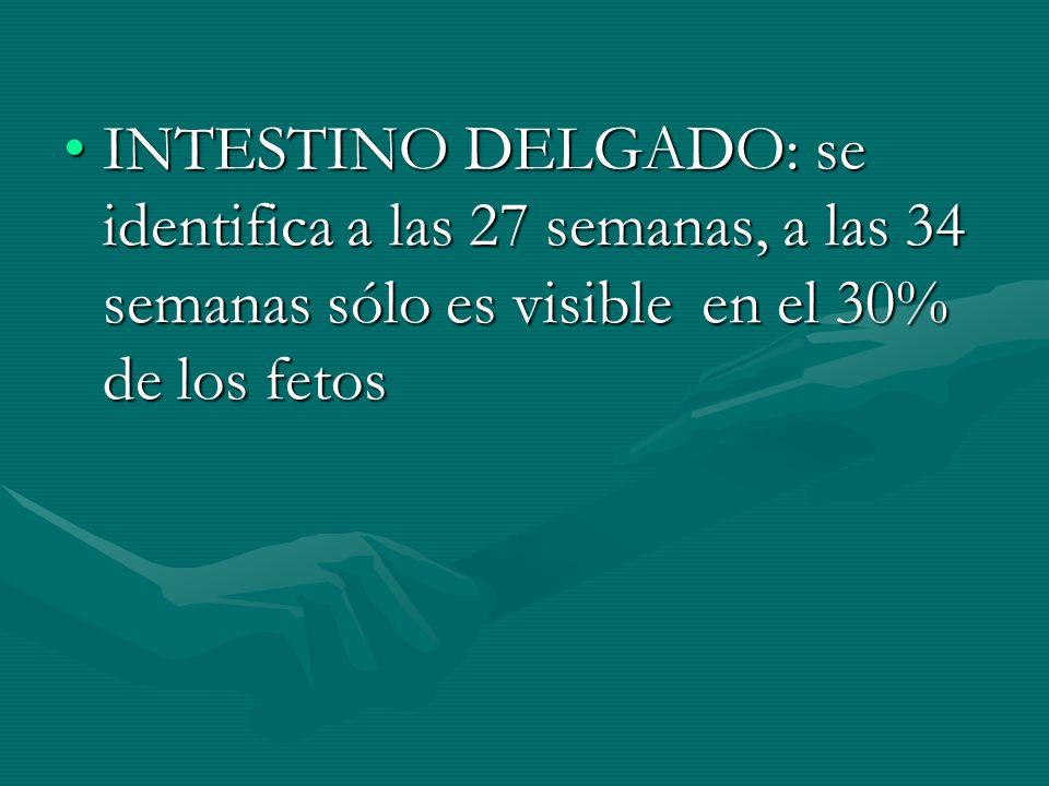 INTESTINO DELGADO: se identifica a las 27 semanas, a las 34 semanas sólo es visible en el 30% de los fetos