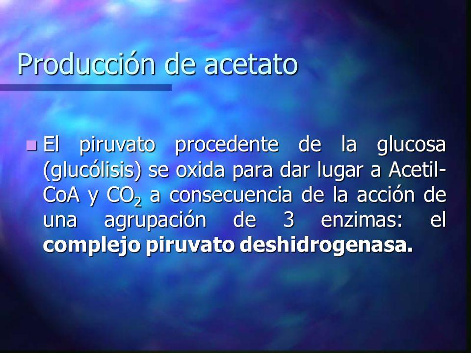 Producción de acetato