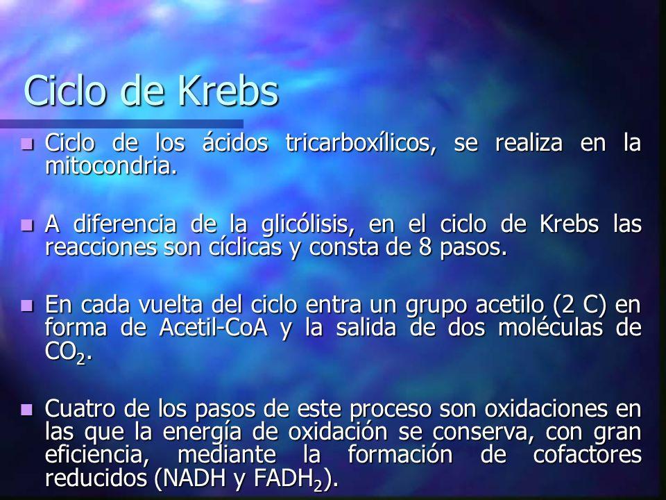 Ciclo de KrebsCiclo de los ácidos tricarboxílicos, se realiza en la mitocondria.
