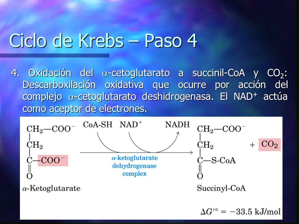 Ciclo de Krebs – Paso 4