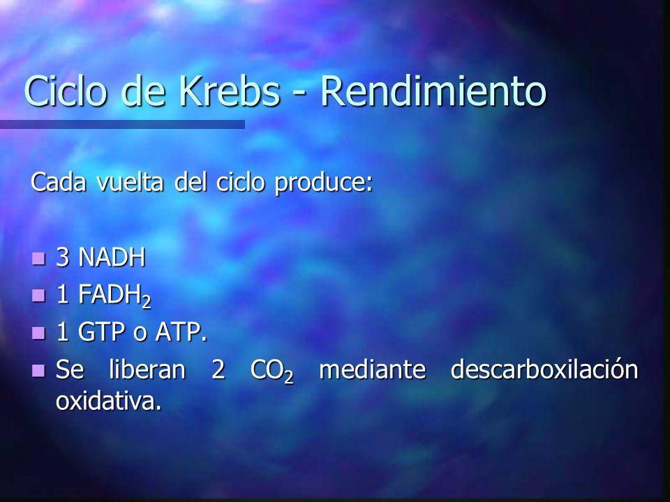 Ciclo de Krebs - Rendimiento