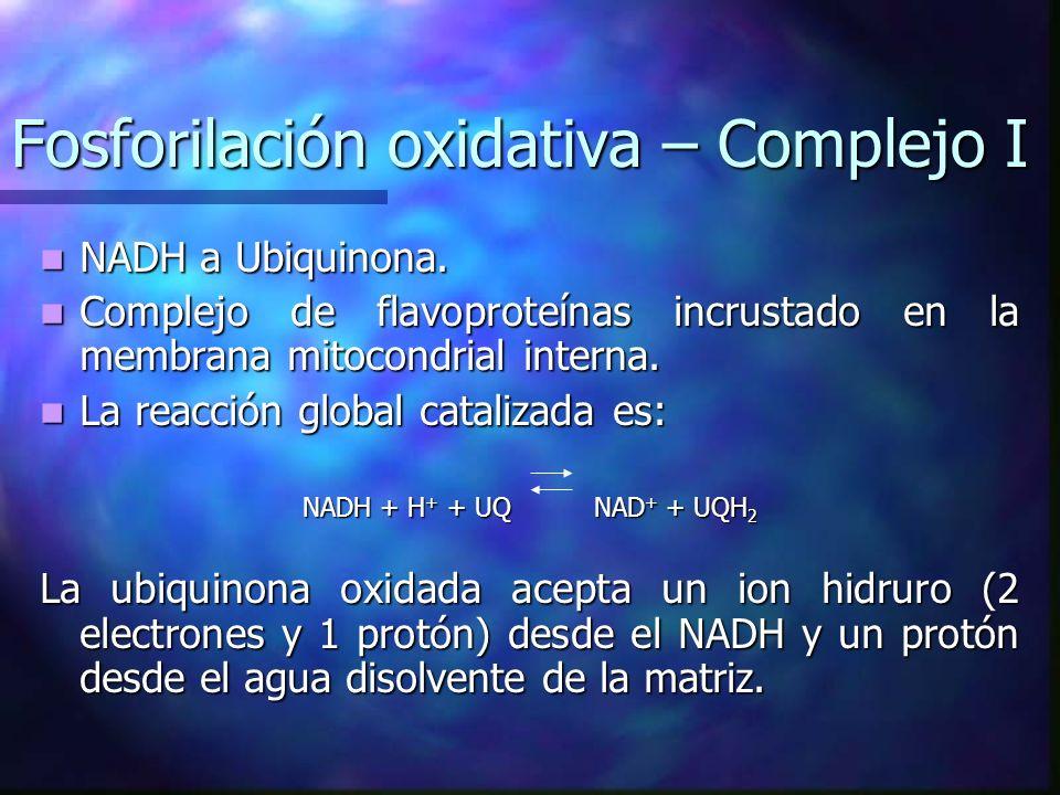 Fosforilación oxidativa – Complejo I