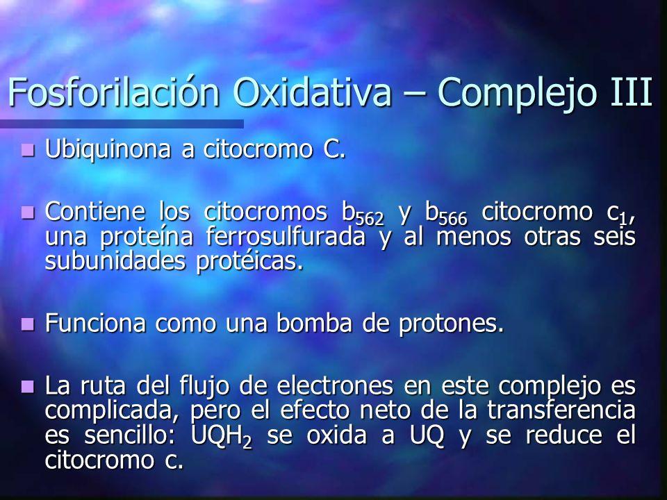 Fosforilación Oxidativa – Complejo III