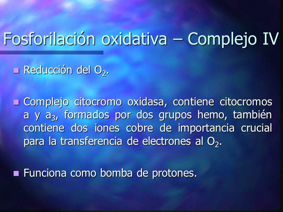 Fosforilación oxidativa – Complejo IV
