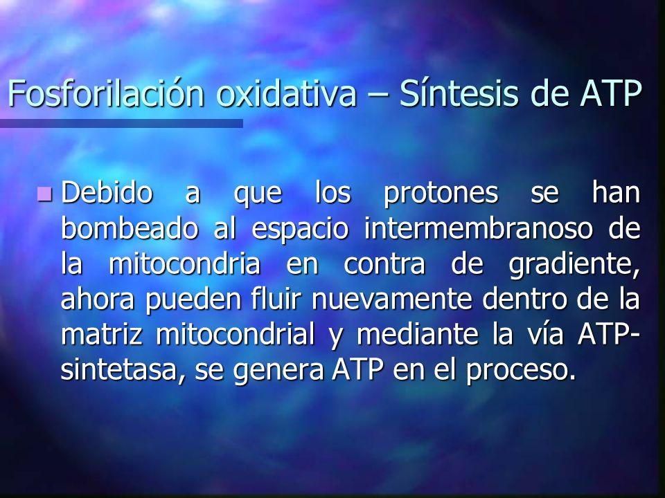 Fosforilación oxidativa – Síntesis de ATP