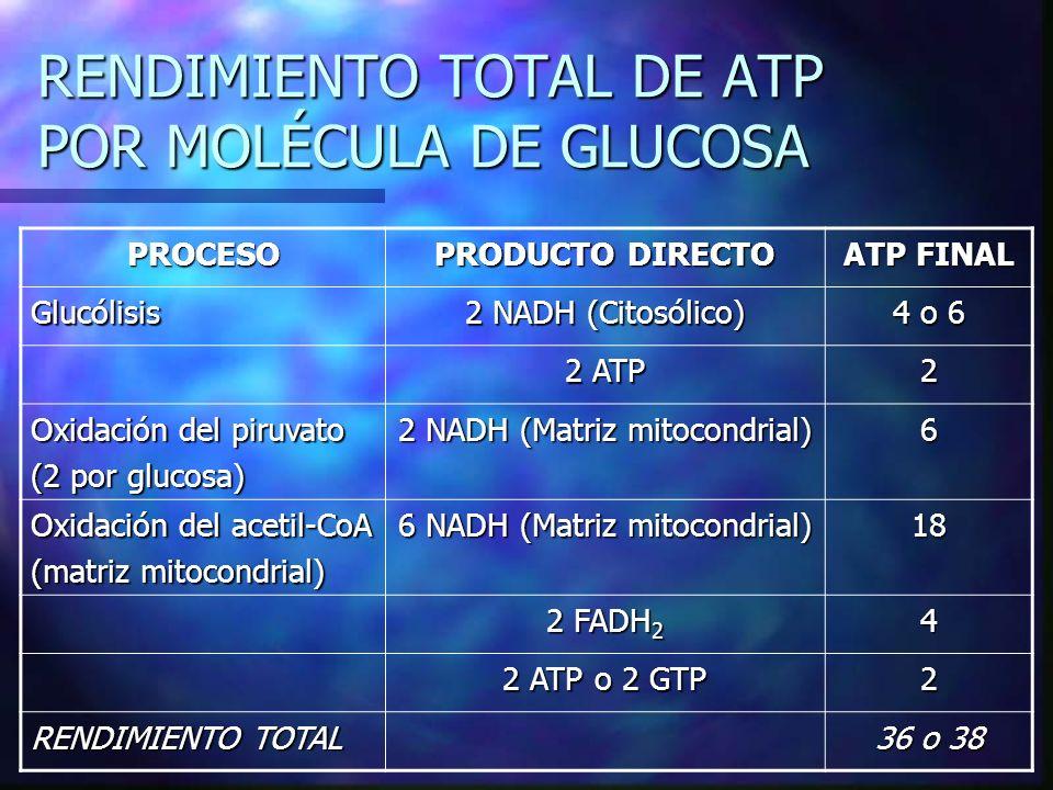 RENDIMIENTO TOTAL DE ATP POR MOLÉCULA DE GLUCOSA