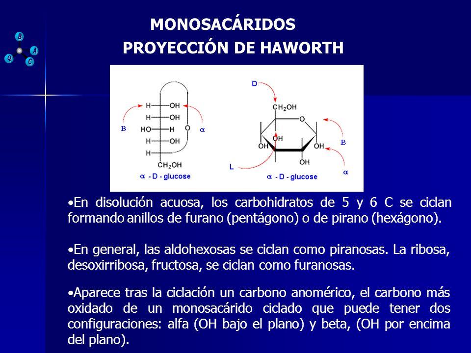 MONOSACÁRIDOS PROYECCIÓN DE HAWORTH