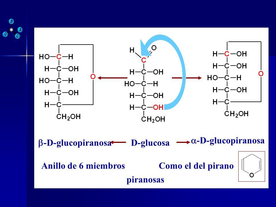 D-glucosa a-D-glucopiranosa b-D-glucopiranosa Anillo de 6 miembros Como el del pirano piranosas