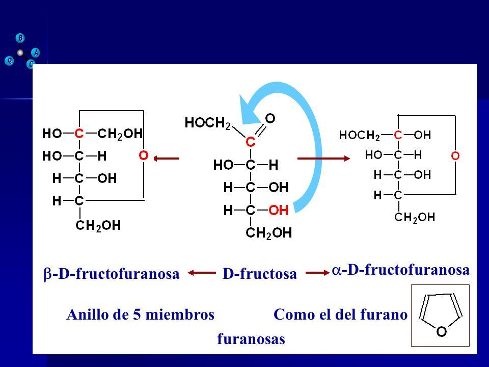 D-fructosa a-D-fructofuranosa b-D-fructofuranosa Anillo de 5 miembros Como el del furano furanosas