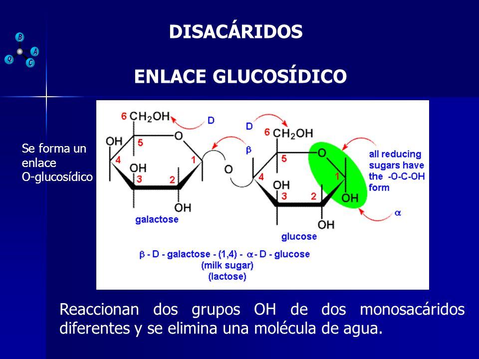 DISACÁRIDOS ENLACE GLUCOSÍDICO