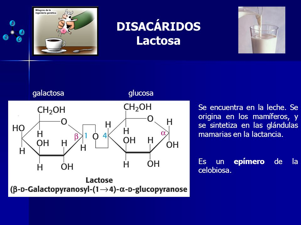 DISACÁRIDOS Lactosa galactosa glucosa