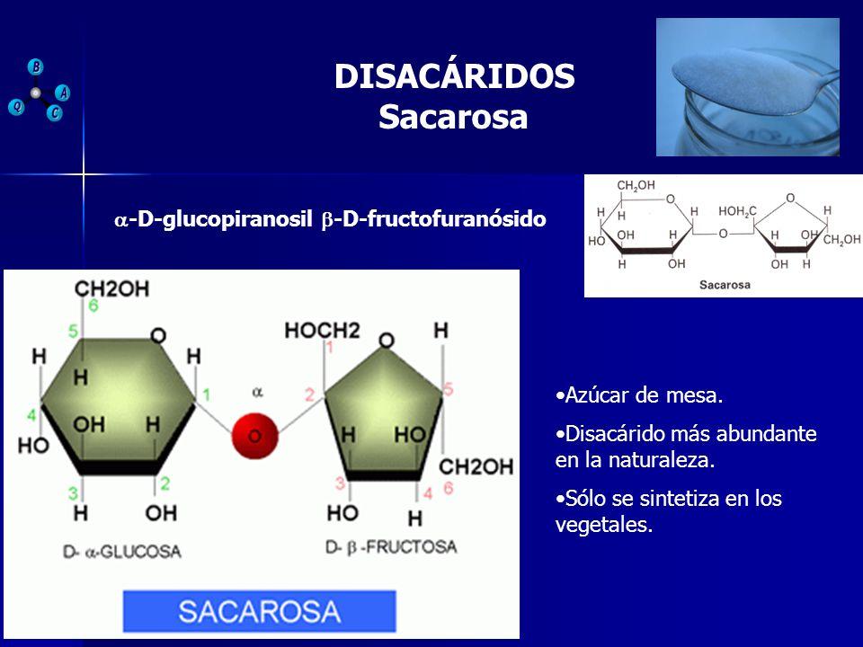 DISACÁRIDOS Sacarosa -D-glucopiranosil -D-fructofuranósido