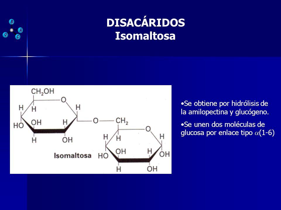 DISACÁRIDOS Isomaltosa