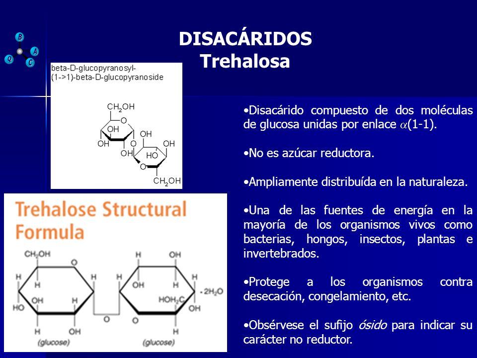DISACÁRIDOS Trehalosa