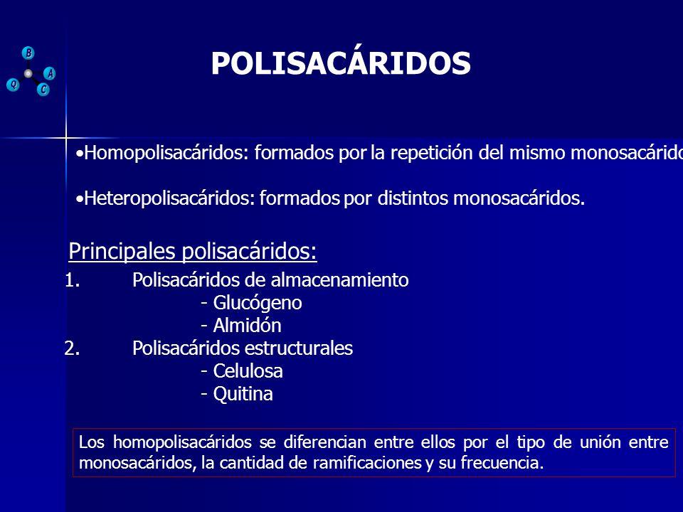 POLISACÁRIDOS Unión de más de 20 monosacáridos.