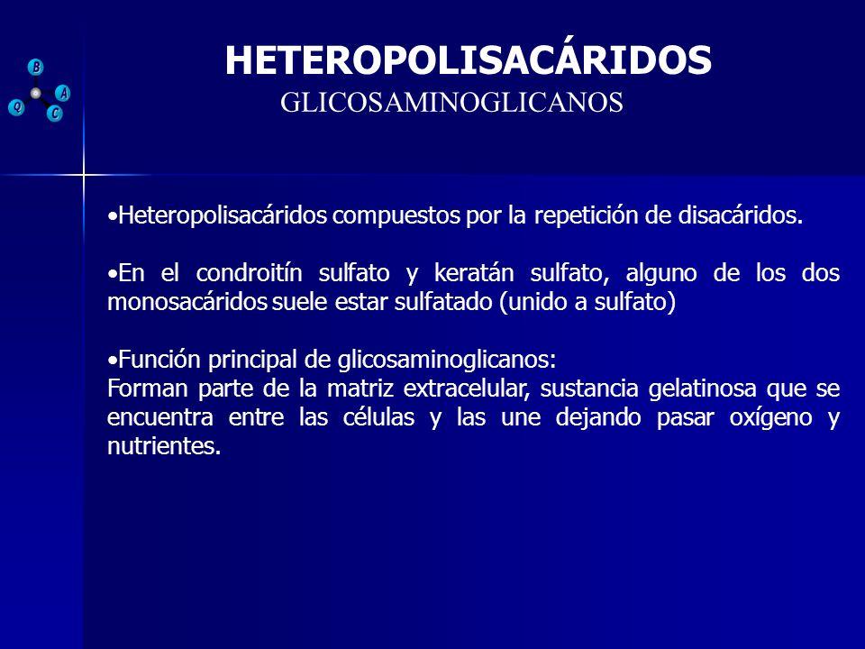 HETEROPOLISACÁRIDOS GLICOSAMINOGLICANOS